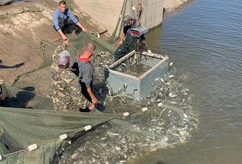 В озеро Кагул вселять 2,5 млн екз. цінних видів риб, – Одеський рибпатруль