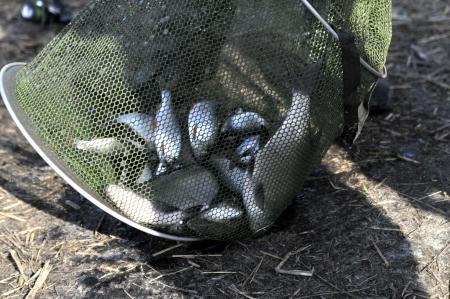 У жовтні вилучено більше 400 кг незаконно добутих видних біоресурсів, – Одеський рибпатруль