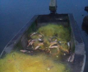 На Одещині порушник виловив 200 кг риби на майже 300 тис. грн збитків